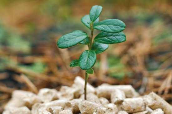 pellets-biomasa